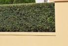 Ashburton Decorative fencing 30